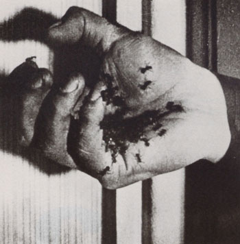 Still from Un Chien Andalou (1929)